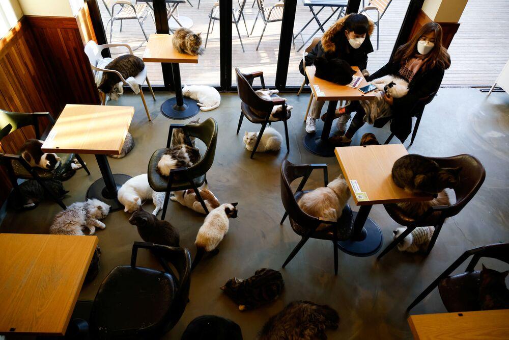 Gli ospiti del neko café Catgarden a Seoul, Corea del Sud.