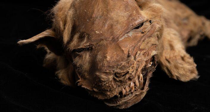 El cachorro momificado Zhùr