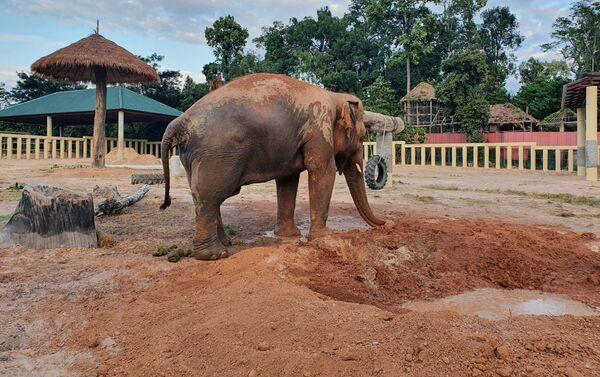 Elefante Kaavan in Cambogia - Sputnik Italia