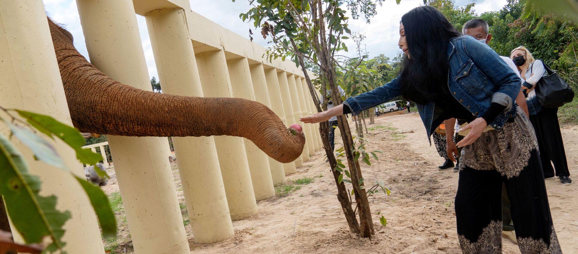 Elefante Kaavan in Cambogia - Sputnik Italia, 1920, 23.12.2020