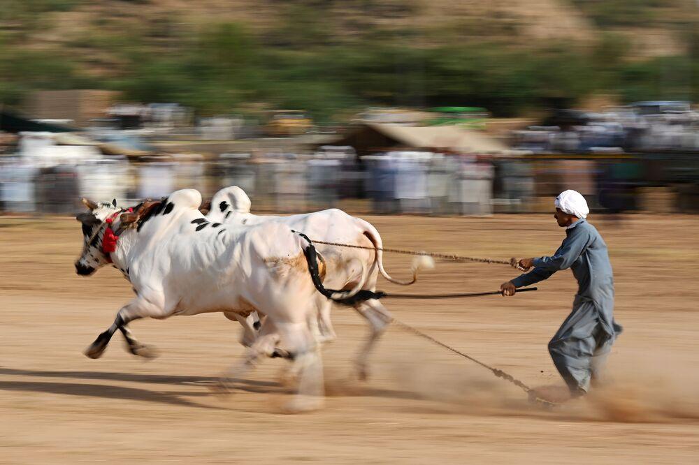 Tradizionale corsa di tori al villaggio di Bilawal a Chakri, Pakistan