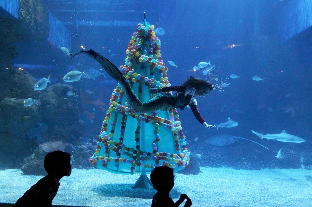 Un subacqueo nuota accanto all'albero di Natale nell'acquario di Jakarta