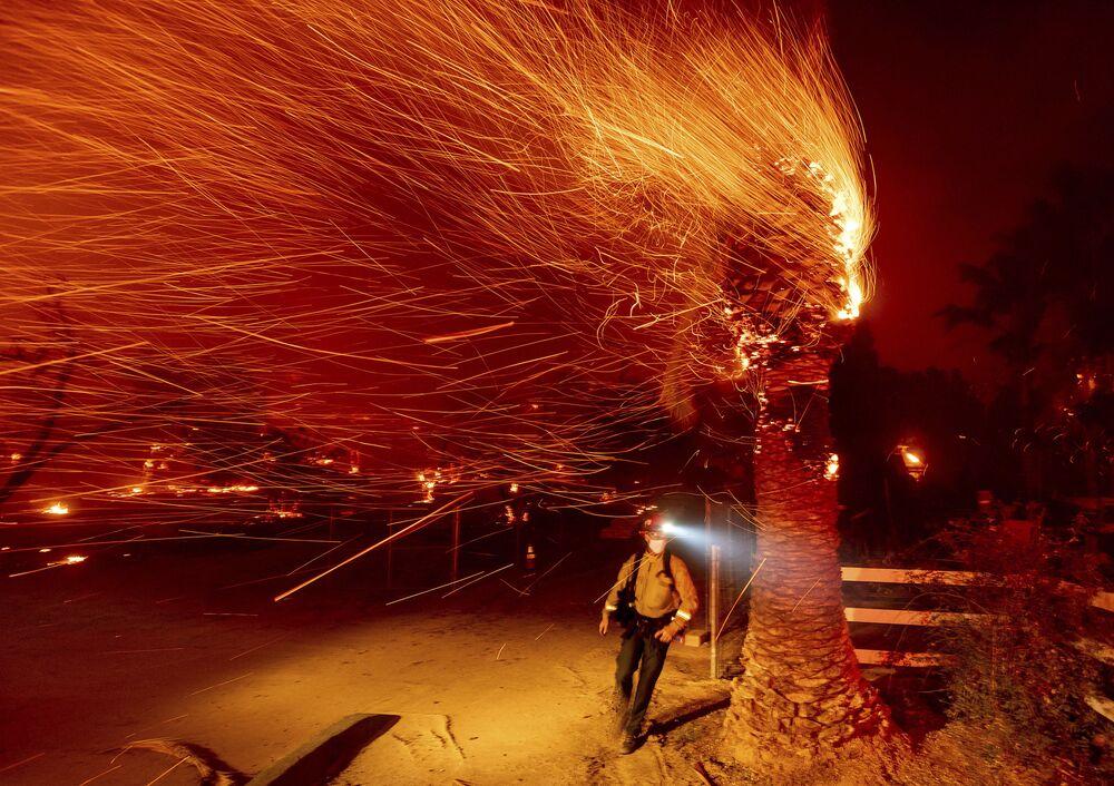 Un vigile di fuoco passa davanti a un albero in fiamme mentre spegne un incendio nella comunità di Silverado in California, USA