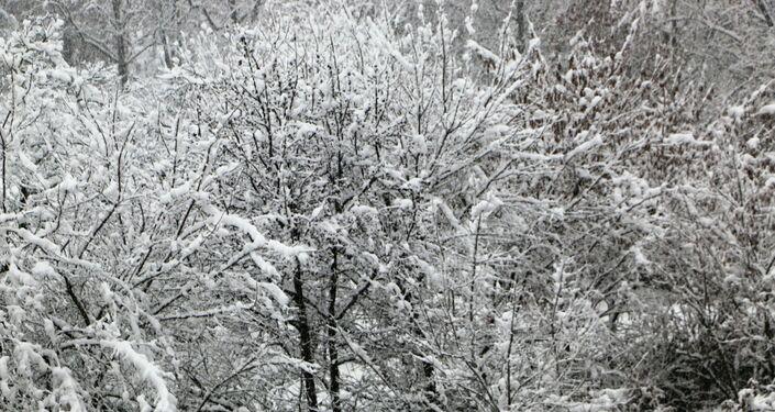 Milano imbiancata dalla neve
