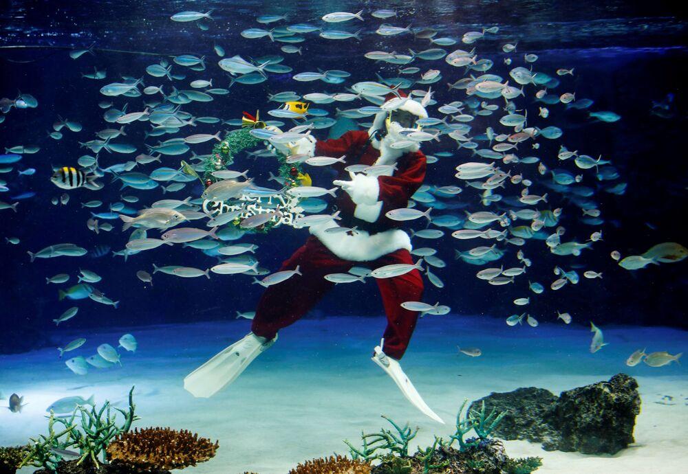 Subacqueo vestito da Babbo Natale al Sunshine Aquarium di Tokyo