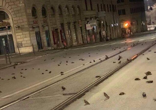 Strage di uccelli a Roma la notte di Capodanno