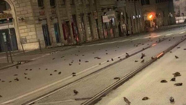 Strage di uccelli a Roma la notte di Capodanno - Sputnik Italia