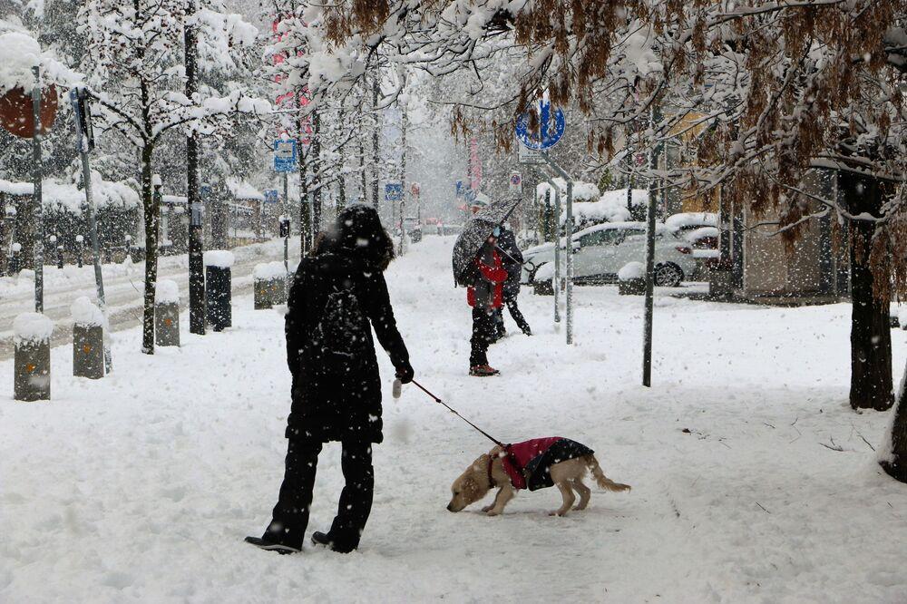 Un cane a Milano sotto la neve