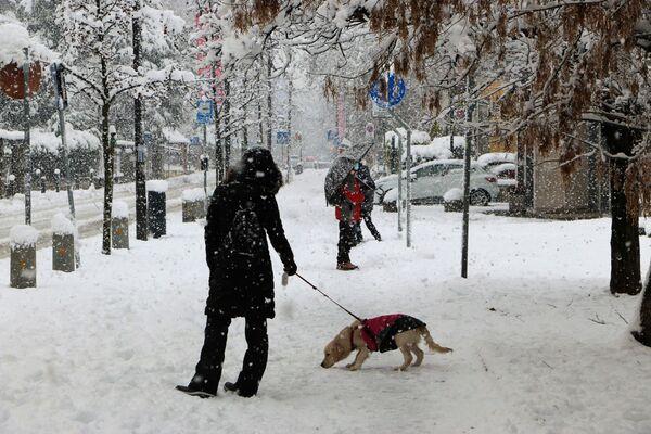 Un cane a Milano sotto la neve - Sputnik Italia