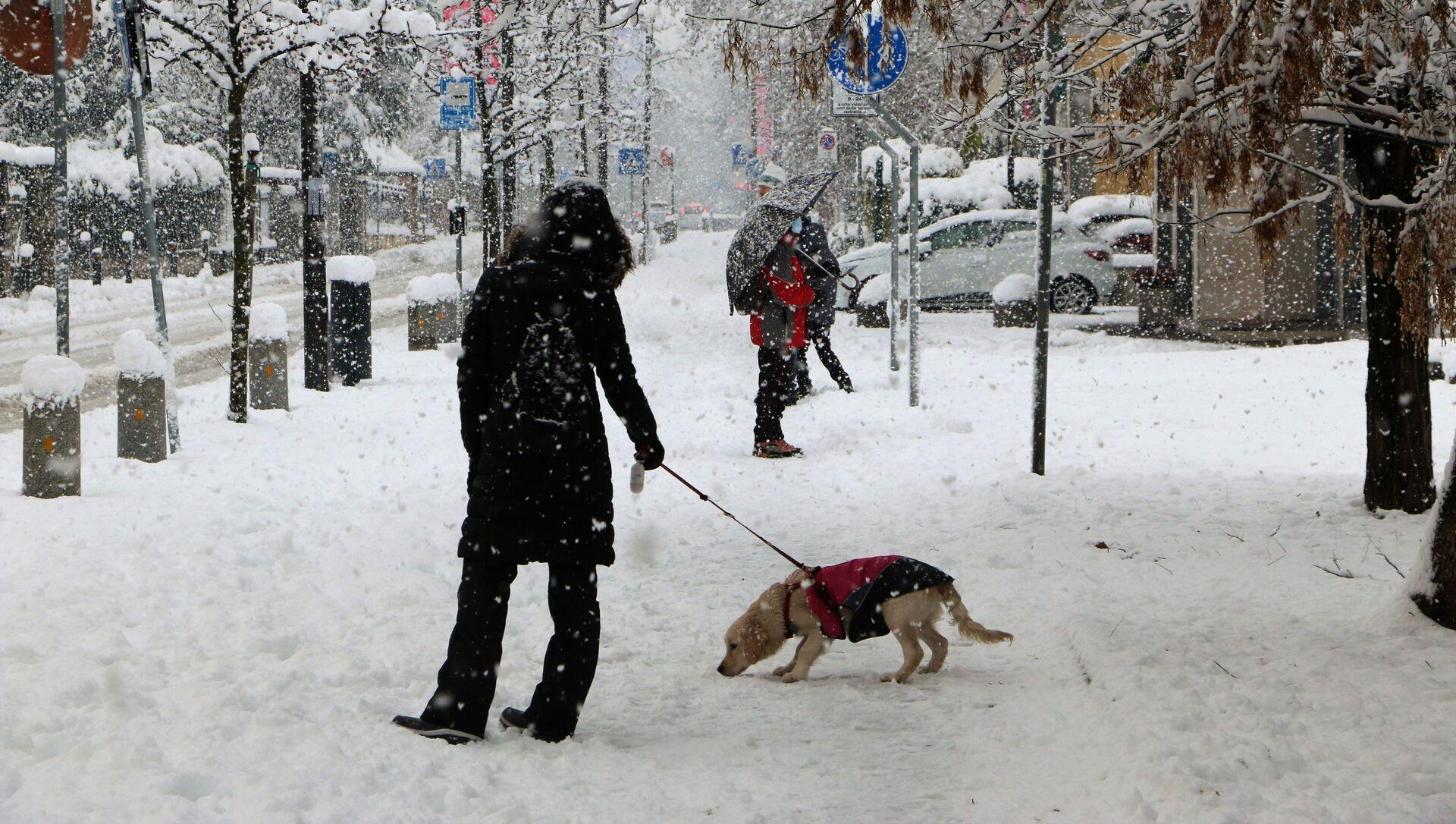 Un cane a Milano sotto la neve - Sputnik Italia, 1920, 13.02.2021