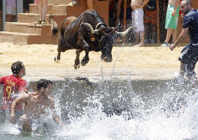 Un toro si tuffa nel mare durante il festival spagnolo Bous a la mar, Dénia, Spagna.