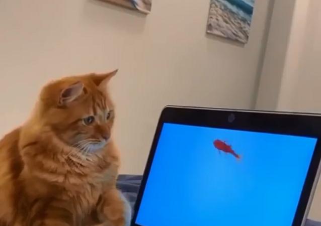 Gatto vuole mangiare il pesce