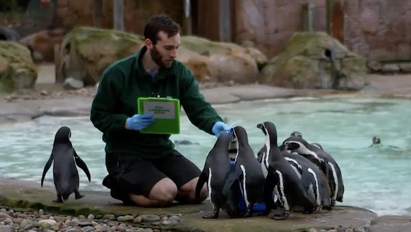 I dipendenti dello zoo di Londra contano gli animali per l'inventario annuale - Sputnik Italia
