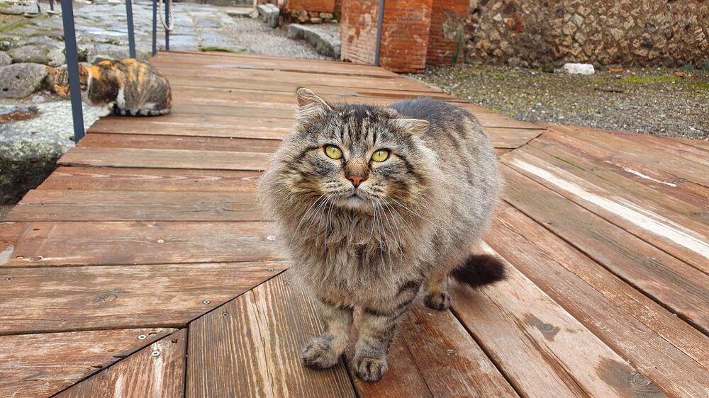 Gatto di Pompeii