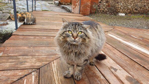 Gatto di Pompeii  - Sputnik Italia
