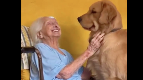 grandma and golden retriever - Sputnik Italia