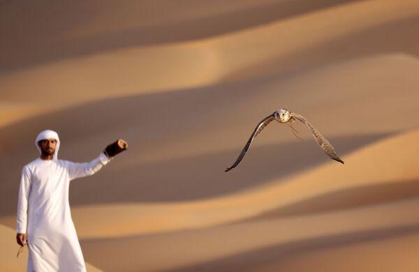 La falconeria non è una disciplina facile, perché i falchi non sono semplici da domare - Sputnik Italia