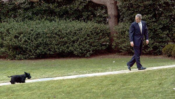 Президент США Джордж Буш со своей собакой Барни в Белом доме, 2003 год - Sputnik Italia