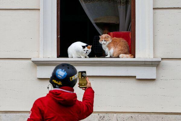 Un uomo sta fotografando i gatti in una finestra a Roma, Italia.  - Sputnik Italia