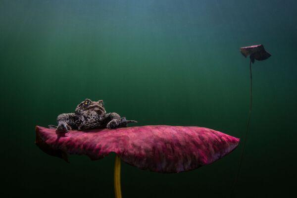 La foto di Johan Sundelin - Sputnik Italia