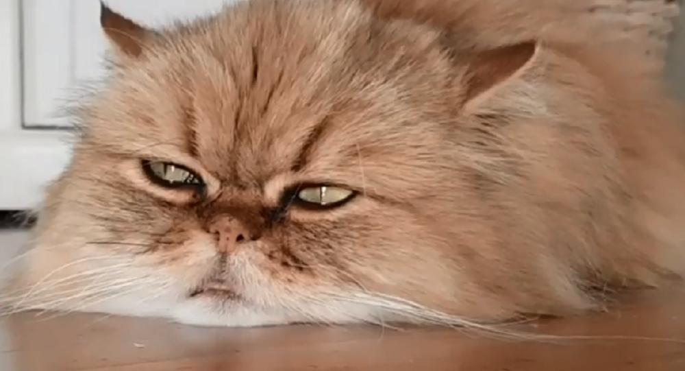 Gatto sconsolato