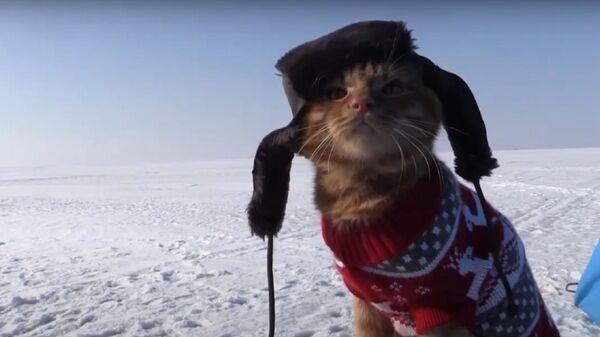 Gatto in colbacco accompagna il suo padrone a pesca - Sputnik Italia