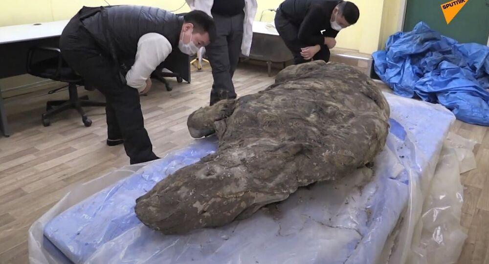 Russia: in Jacuzia trovati i resti di un rinoceronte lanoso vissuto tra 20.000 e 50.000 anni fa