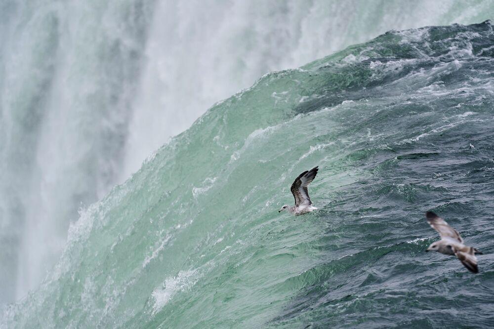Un gabbiano vola sulle cascate del Niagara, Ontario, Canada.