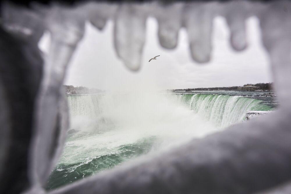 Un gabbiano vola su Horseshoe Falls, la più grande delle tre cascate che compongono il complesso del Niagara, Ontario, Canada.