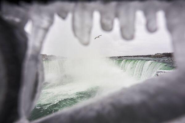 Un gabbiano vola su Horseshoe Falls, la più grande delle tre cascate che compongono il complesso del Niagara, Ontario, Canada.  - Sputnik Italia