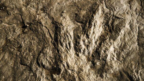Impronta fossile di un dinosauro - Sputnik Italia