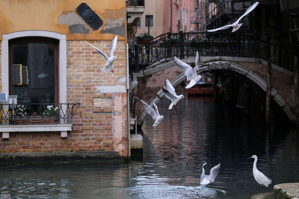 Molti animali hanno trovato nella città di Venezia un luogo ospitale dove vivere: uccelli su un canale a Venezia