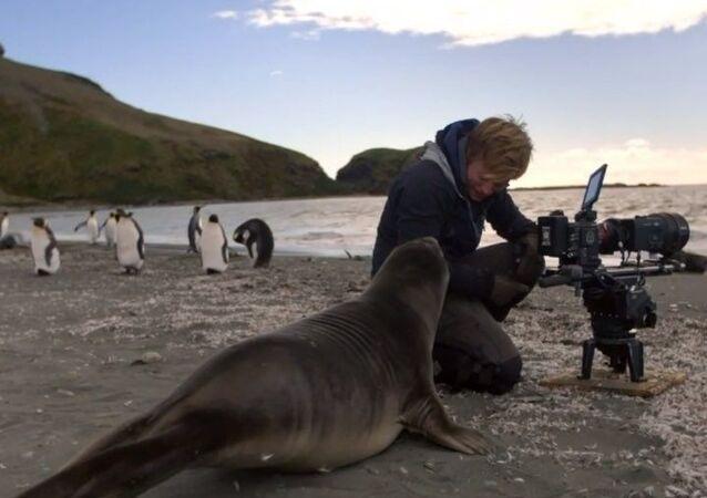 Curioso cucciolo di elefante marino viene a salutare il cameramen