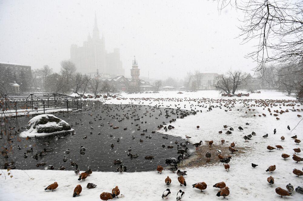 Le anatre dello zoo di Mosca