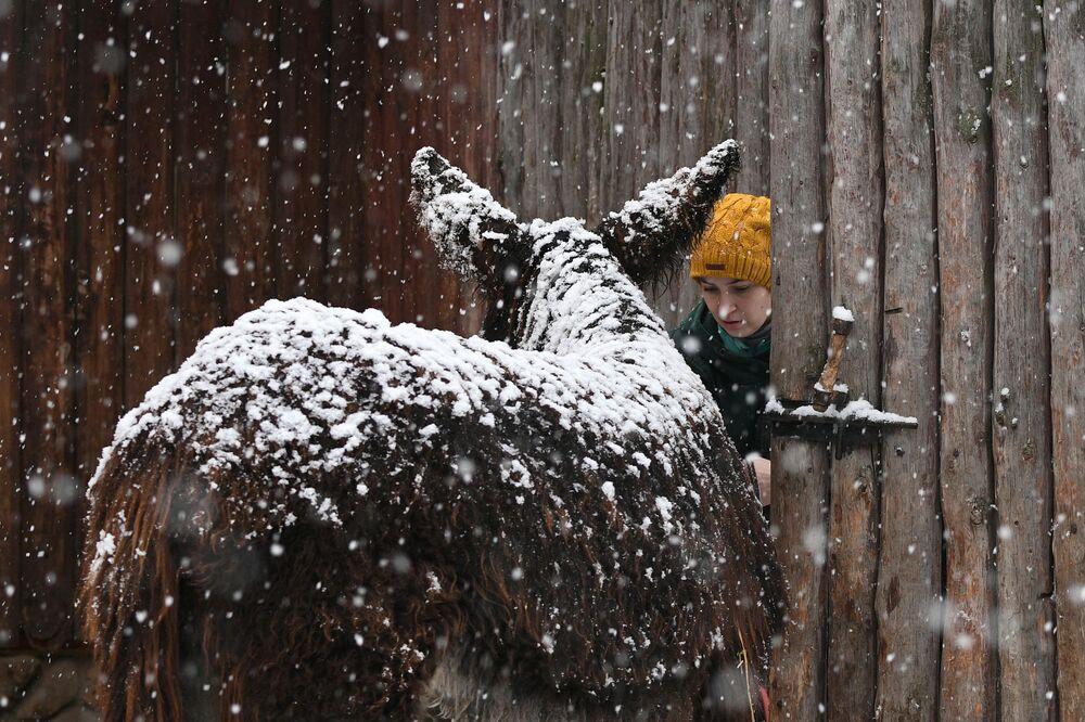Un asino sotto la neve allo zoo di Mosca