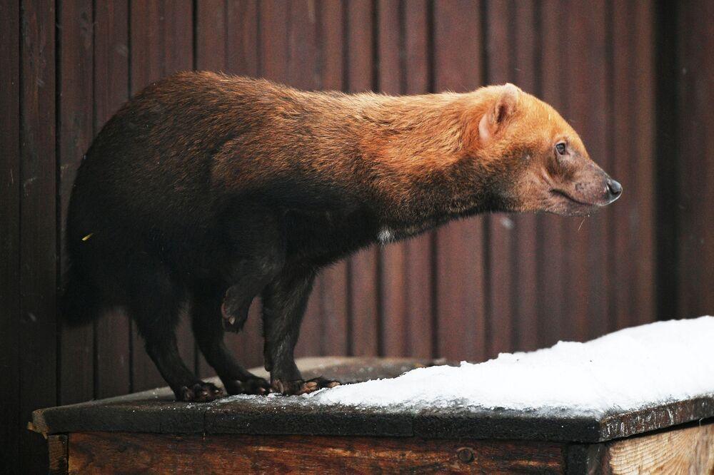 Uno speoto dello zoo di Mosca