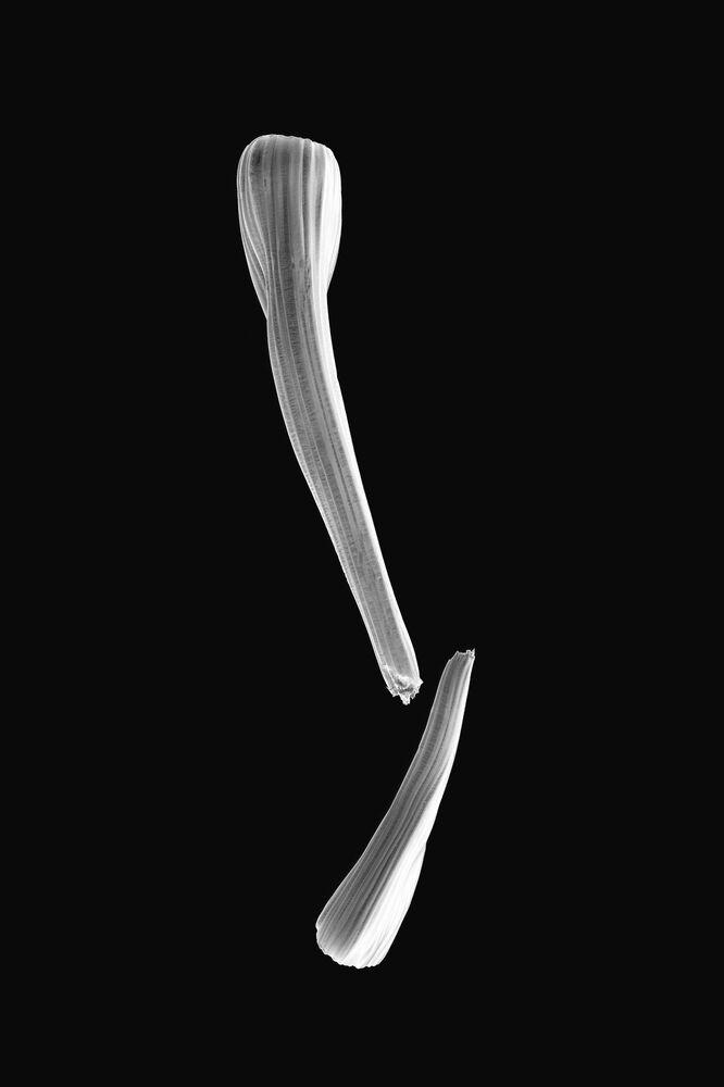 La foto Atlante di patologia del fotografo giapponese Oltea Sampetrean,  che è stata la vincitrice nella categoria Scienza tra i fotografi non professionisti del concorso fotograficoTokyo International Foto Awards 2020.