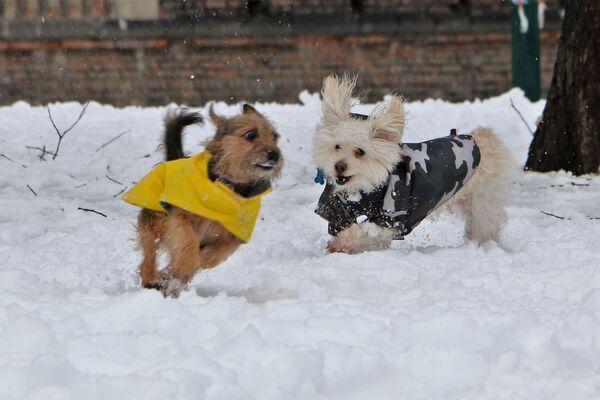 I cani si godono la neve a Milano, Italia - Sputnik Italia