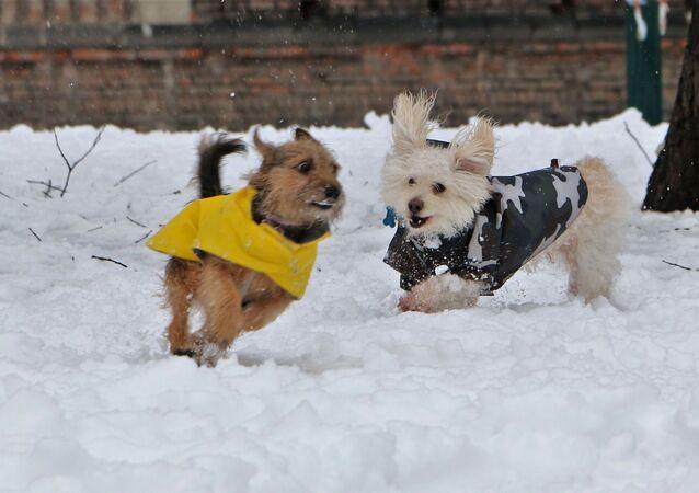 I cani si godono la neve a Milano, Italia