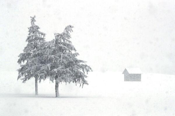 La neve copre il paesaggio della provincia italiana dell'Alto Adige, in Italia, sabato 23 gennaio 2021 - Sputnik Italia
