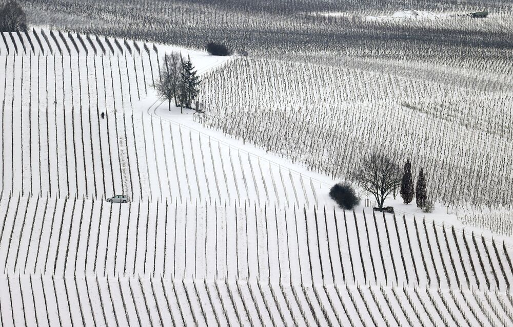 Vigneti innevati in Germania