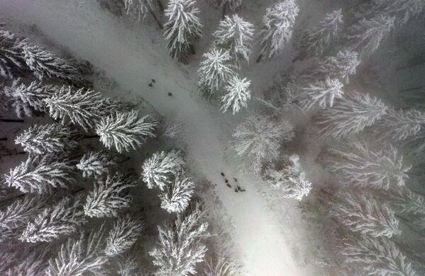 Un paesaggio innevato sul monte Nordhelle vicino a Meinerzhagen, nella Germania occidentale, il 7 gennaio 2021 - Sputnik Italia