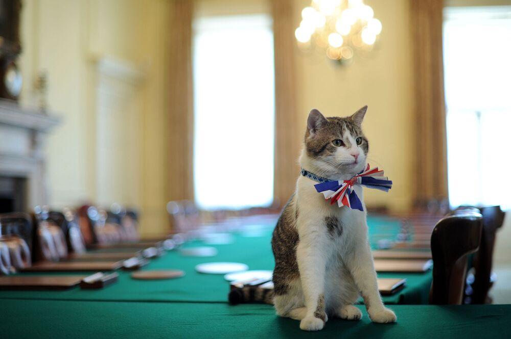 Il gatto Larry, gatto di Downing Street