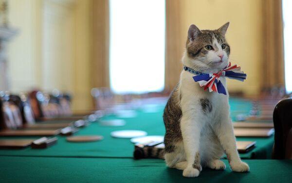 Il gatto Larry - Sputnik Italia