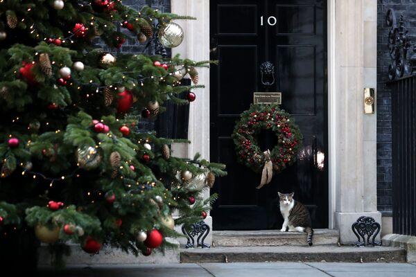 Il gatto Larry, gatto di Downing Street - Sputnik Italia