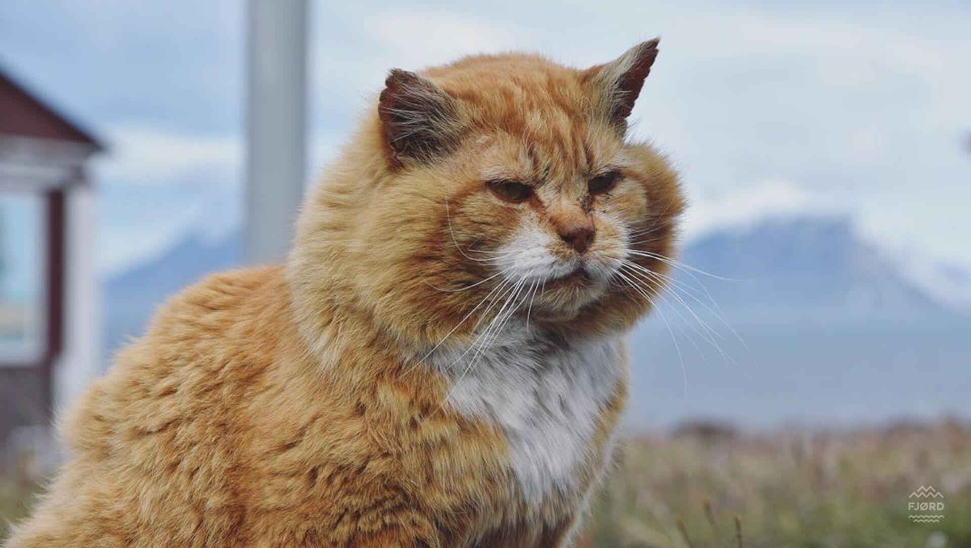 Il gatto Kesha - Sputnik Italia, 1920, 17.02.2021