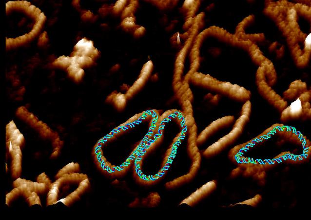 Scienziati immortalano Dna danzante nella cellula
