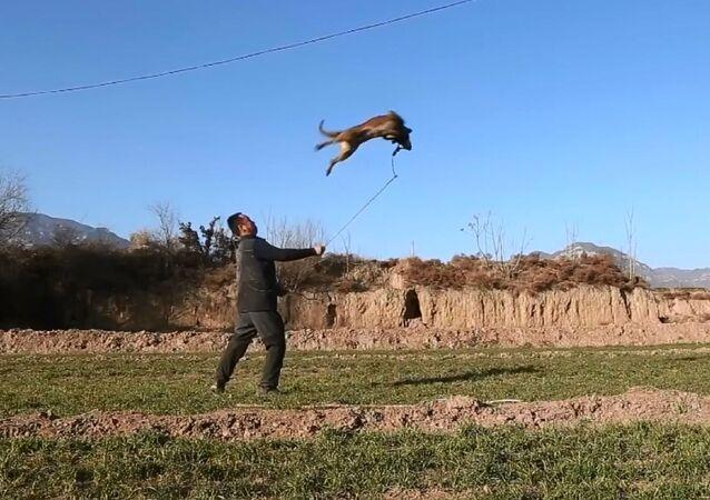 Cane-ninja conquista i social cinesi