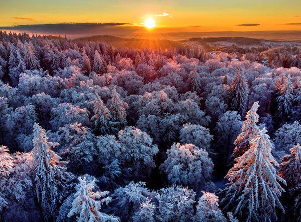 Un bosco innevato nei pressi di Francoforte, Germania.  - Sputnik Italia