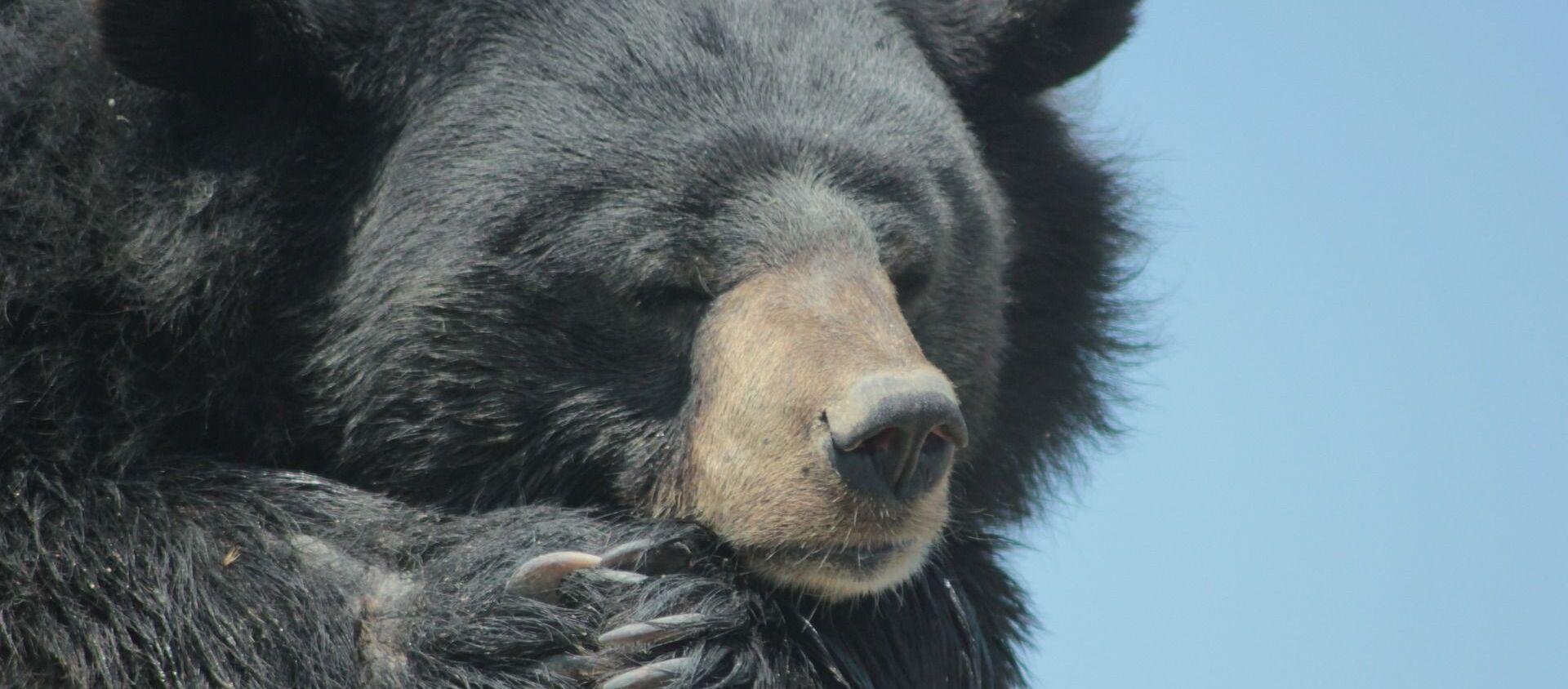Un orso nero - Sputnik Italia, 1920, 21.02.2021